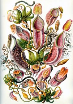 wow. botanical illustrations from the late 1800's by Ernst Haeckel. look him up!