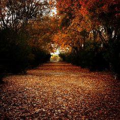 "Eliza's K photos | ""Autumn Leaves"" #autumn #nature_greece..."