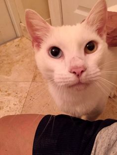 Cat Gets Help to See Again and Surprises Rescuers with His Gorgeous Eyes..