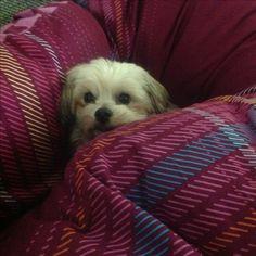 Hunde Foto: Silvia und Sandy - jetzt hast mich doch gefunden.jpeg Hier Dein Bild hochladen: http://ichliebehunde.com/hund-des-tages  #hund #hunde #hundebild #hundebilder #dog #dogs #dogfun  #dogpic #dogpictures