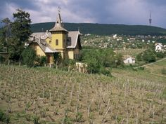 There are countless excellent cuvées that each has its own character and taste. The best classical ones come from Polgar, Bock, Tarnas and Attila Gere, and Tiffan. 12th Century, Hungary, Wines, Culture, Decorations, House Styles, Attila, Dekoration, Deko