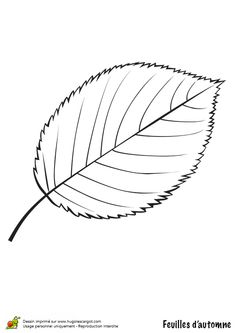 Coloriage / dessin feuilles automne cerisier