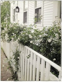 dreamy: white picket fence + climbers
