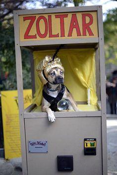 Fortune Dog