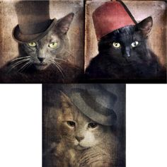 #Cats in the Hats Collection Sold by The Lonely Pixel Photography