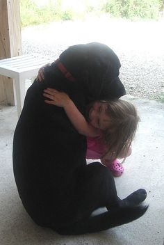 Rottweiler, reminds me of our sweet Sampson and Bella. He even has a red collar. I miss that big boy!