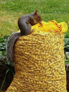 Oh my Gosh!  I have just found SQUIRREL HEAVEN!!!!!.........