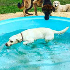 The dogs love the splash pools to cool down and a quick dip. They are cattle troughs that we have decked ourselves.