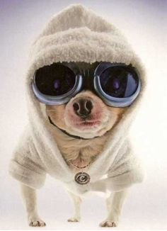 This is probably the warmest & coolest puppy wearing glasses we know.