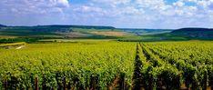 Winzerinterview auf www.auxbulles.at/blog Interview, Vineyard, Blog, Outdoor, Champagne, Challenges, Outdoors, Vine Yard, Blogging