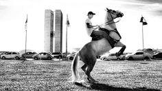 ©2016 Glauco Máximo  #light #memory #horse #horses #cavalo #vaquejada #monochrome #bw  #bnw #blacknwhite #blackandwhite #euapoioavaquejada  #abqm #portalvaquejada #congressonacional #clubedocavalonacional #vaquejadalegal #medvet #photography #photo #fotojornalismo #art #animal #portrait #brasilia #brasília #bsb #df #brasil #brazil