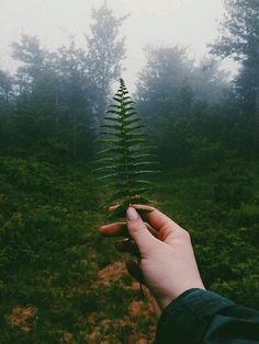 5 egyszerű trükk, a környezettudatosabb életért - Így óvd a környezeted a mindennapokban!