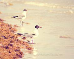 """Seagulls on the Shore"" 8x10 fine art photo print by KatieLloydPhoto on Etsy - shabby chic, beach cottage home decor"