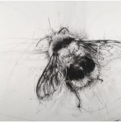 April Coppini, Black-tailed BumbleBee, charcoal on paper Watercolor Flowers Tutorial, Bee Photo, Charcoal Art, Pretty Drawings, Butterfly Pictures, Bee Tattoo, Insect Art, Bee Art, Nature Illustration