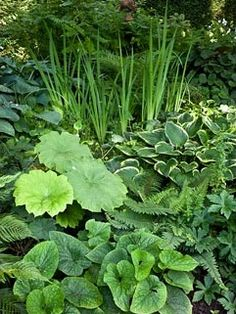 Mixed border of Hosta, Darmera peltata and Brunnera macrophylla