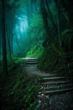 Shady path to...