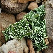 Starfish succulent I 17 Incredible Houseplants You Need Right Now.