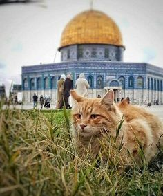 ** life ,smelling breezy air revolving around hugging the Aqsa mosques young-men around! Kittens Cutest, Cute Cats, Beautiful Cats, Beautiful Pictures, Israel Country, Palestine Art, Dome Of The Rock, Mekkah, Beautiful Mosques