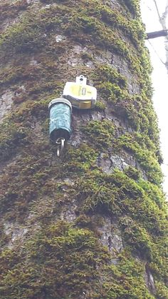 Nice cache.  8' up in a tree, you have to grab the cache and pull the cache down by the tape measure.  #IBGCp