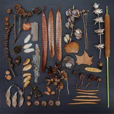 Natures mortes- Emily Blincoe
