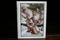 Ancient Bristlecone Pine set of 10 blank note cards, bristle cone tree stationary, old tree blank card, fine art card pastel. by MamaKikis on Etsy
