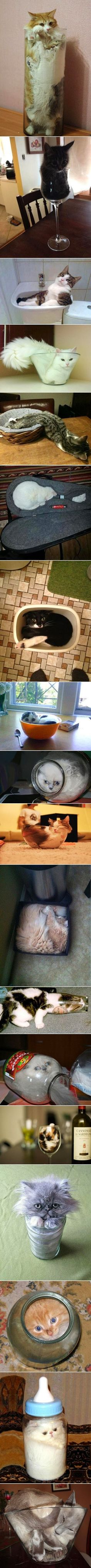 This Pin was discovered by Amanda D. Discover (and save!) your own Pins on Pinterest. | See more about cats.