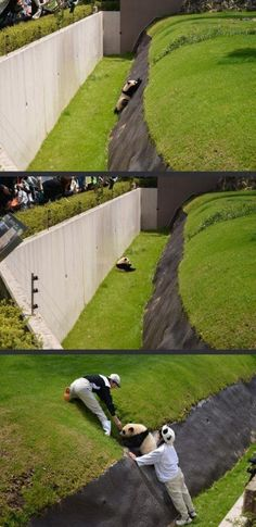 This little panda fell and he couldn't get out :3 Poor little fellow(?)...