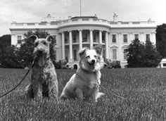 The Kennedy family dogs pose for a picture while just hanging out: