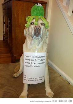 Un pulpo en la cabeza...