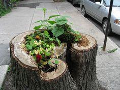 tree stump garden (cheaper than having the stump ground! Dream Garden, Home And Garden, Tree Stump, Outdoor Furniture Sets, Outdoor Decor, Garden Spaces, Horticulture, Gardening Tips, School Community