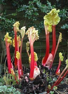 Vegetables, Flowers, Plants, Vegetable Recipes, Flora, Plant, Royal Icing Flowers, Flower, Florals