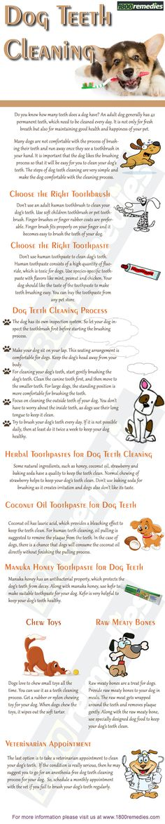 Many dogs are not comfortable with the process of brushing their teeth and run away once they see a toothbrush in your hand. It is important that the dog likes the brushing process so that it will be easy for you to clean your dog's teeth. The steps of dog teeth cleaning are very simple and make the dog comfortable with the cleaning process.
