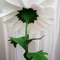 ✿♥✿Оля Казмирчук(Лищина)✿♥✿ - мои гигантские цветы | OK