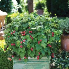 Edible landscaping, or foodscaping, has exploded as the hottest gardening trend in years.