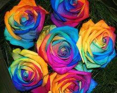 Rainbow roses❤