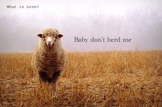 Don't herd me no more :D