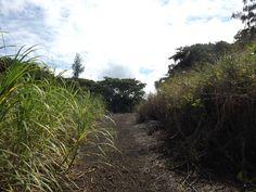 Sugar cane road