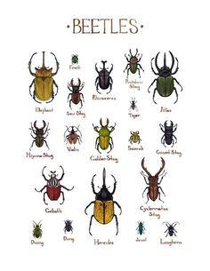 Beetles Field Guide Art Print