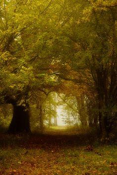 Entrance To Autumn by Grandmagoingnuts.deviantart.com on @DeviantArt