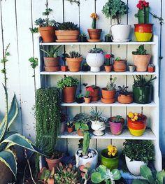 Hyllyllinen kasveja! Itse saan pidettyä hengissä vain kaktukset, mutta värikkäillä ruukuilla ja kukkivia kaktuksia valitsemalla niilläkin saa jo koottua värikkään kokonaisuuden #Cactus #plants