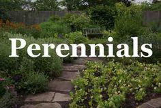 Professional Secrets For Growing Perennial Flowers