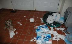 What is it about animals and toilet paper?