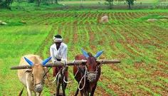 Even though after independence India in today,s date is still an agriculture based country with about its rural population stil depends primarily on agriculture for their livelihood. Agriculture In India, Agriculture Business, Rural India, Indian Government, State Government, Organic Farming, Slow Food, Climate Change, Indiana