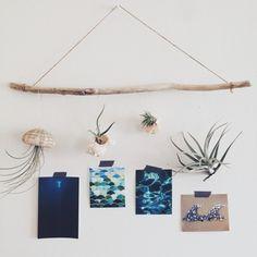 流木に貝殻やウニの殻を吊るして、ナチュラルなオブジェに。エアープランツが良い味出してます。ポストカードや写真を貼って、楽しかった海の思い出コーナーを作ってもいいですね。