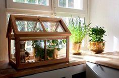 Die 125 Besten Bilder Von Gewachshaus Hothouse Terrarium Plants