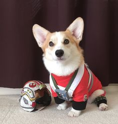 May The 4th Be With You: 30 Dogs Who Are Ready For Star Wars Day! [PICTURES]