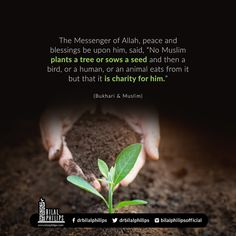 Islamic Quotes In English, English Quotes, Alhamdulillah, Hadith, Muslim Charity, Trees To Plant, Peace, Sayings, Plants