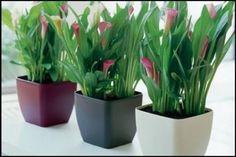 1000 ideas about plantas resistentes ao sol on pinterest - Plantas exteriores resistentes al sol ...