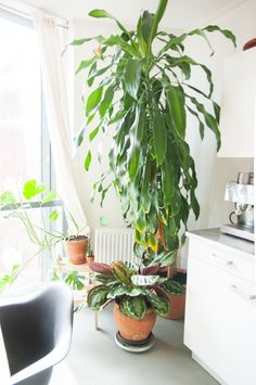 Luc takes great pride in his indoor jungle.