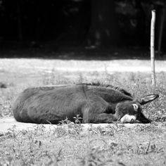 awwww happy sleepy donkey!